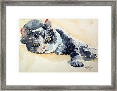 Cat Framed Print by Kovacs Anna Brigitta