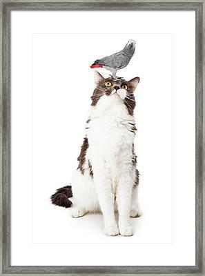 Cat Looking Up At A Bird Framed Print by Susan Schmitz