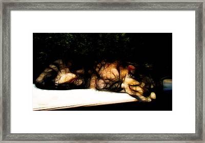 Cat Nap 1 Framed Print by William Horden