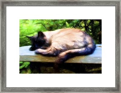 Cat Nap 2 Framed Print by William Horden