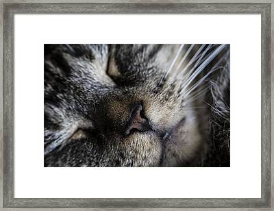 Cat Nap Framed Print by Andrew Pacheco