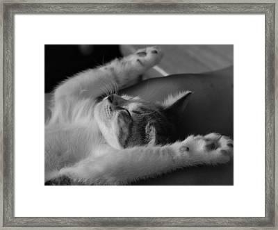 Cat Nap Bw Framed Print by Elizabeth Sullivan