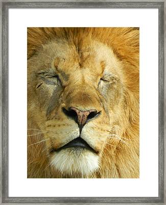 Cat Nap Framed Print by Emmy Marie Vickers