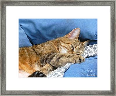 Cat Nap Framed Print by Lingfai Leung