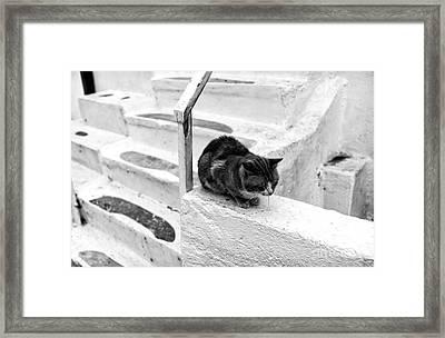Cat Napping Mono Framed Print by John Rizzuto