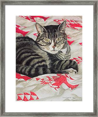 Cat On Quilt  Framed Print by Anne Robinson
