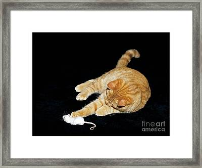 Cat Playing With Mouse Framed Print by Tierbild Okapia