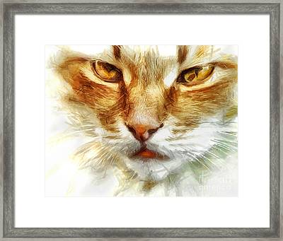 Cat Portrait - Drawing Framed Print by Daliana Pacuraru