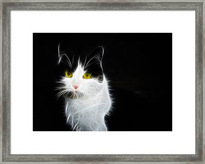 Cat Portrait Fractal Artwork Framed Print by Matthias Hauser