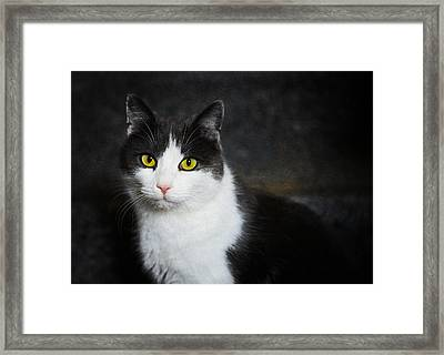Cat Portrait With Texture Framed Print by Matthias Hauser