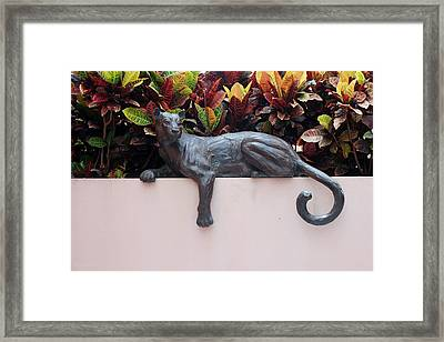 CAT Framed Print by Rob Hans