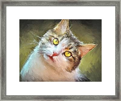 Cat Yellow Eyes Framed Print by Yury Malkov