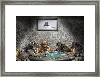 Cata-coolidge Framed Print by Darcy Evans