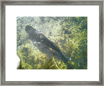 Catch And Release Framed Print by Melissa Osborne