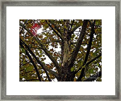 Catch My Glow Framed Print by Diana  Tyson