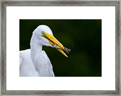Catch Of The Day Framed Print by Andres Leon