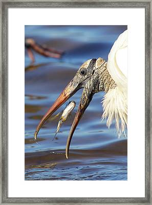 Catch Of The Day Framed Print by Bruce J Robinson