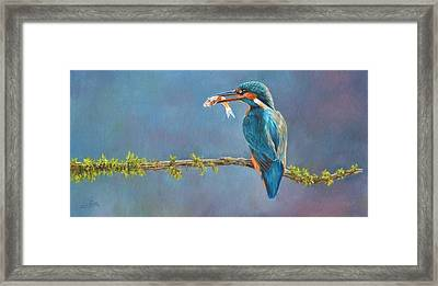 Catch Of The Day Framed Print by David Stribbling