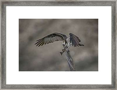 Catch Of The Day Framed Print by Gary Hall