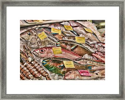 Catch Of The Day Framed Print by Karen Walzer