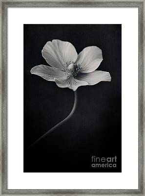 Catch The Light Framed Print by Priska Wettstein