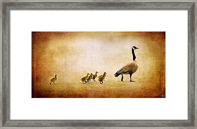 Catch Up Little Gosling Framed Print by Lisa Knechtel