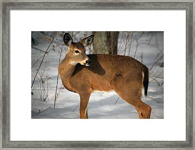 Catching Some Rays Framed Print by Karol Livote