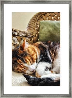 Catnap Framed Print by Anthony Citro