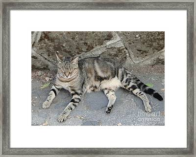 Catouflage Framed Print by Barbie Corbett-Newmin
