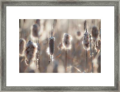 Cattail Light 2 Framed Print by Leland D Howard