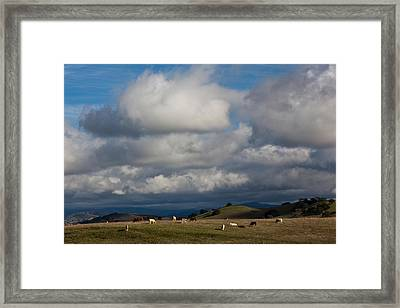 Cattle Grazing In A Field, Santa Framed Print by Panoramic Images
