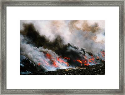 Cattle Infected With Foot And Mouth Framed Print by Ashley Cooper