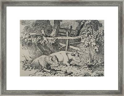 Cattle Resting Framed Print by Robert Hills