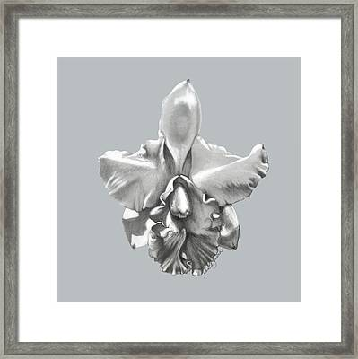 Cattleya I - Sweet Dreams Framed Print by Joan Garcia