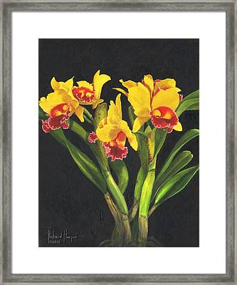 Cattleya Orchid Framed Print by Richard Harpum