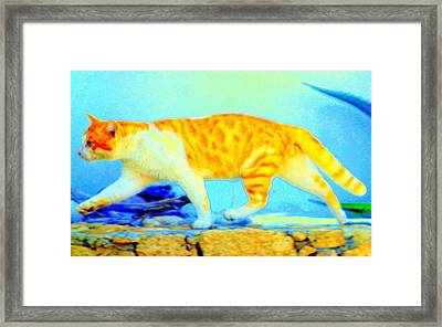 The Noble Art Of Catwalking  Framed Print by Hilde Widerberg