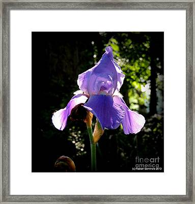 Caught In The Light Framed Print by Rabiah Seminole