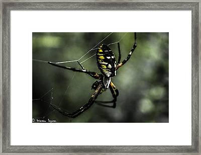 Caught In The Web Framed Print by Steven  Taylor