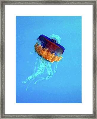 Cauliflower Jellyfish Framed Print by Louise Murray