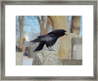 Caw Caw Caw Framed Print by Gothicolors Donna Snyder