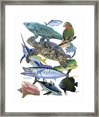 Cayman Collage Framed Print by Carey Chen