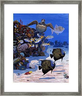 Cayman Reef Re0024 Framed Print by Carey Chen