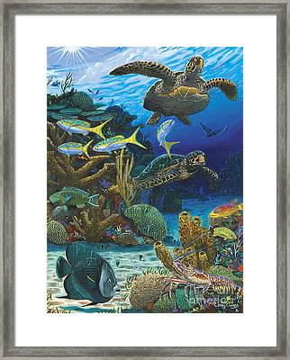 Cayman Turtles Re0010 Framed Print by Carey Chen