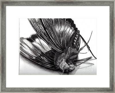 CDL Framed Print by Amy Pike