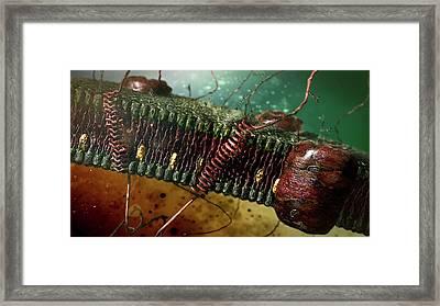 Cell Membrane Framed Print by Karsten Schneider