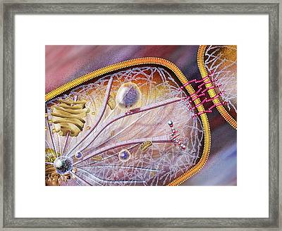 Cell Structural Proteins Framed Print by Nicolle R. Fuller