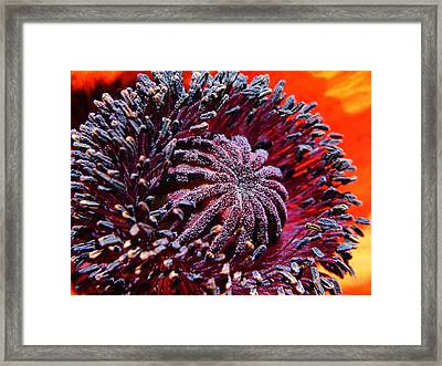 Center Of Attention  Framed Print by Chris Berry