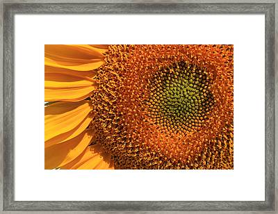 Center Of Attention Framed Print by Donna Kennedy