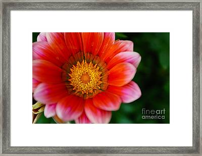 Center Of Attraction Framed Print by Syed Aqueel