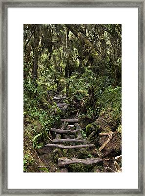Central Circuit On Ruwenzori Framed Print by Martin Zwick